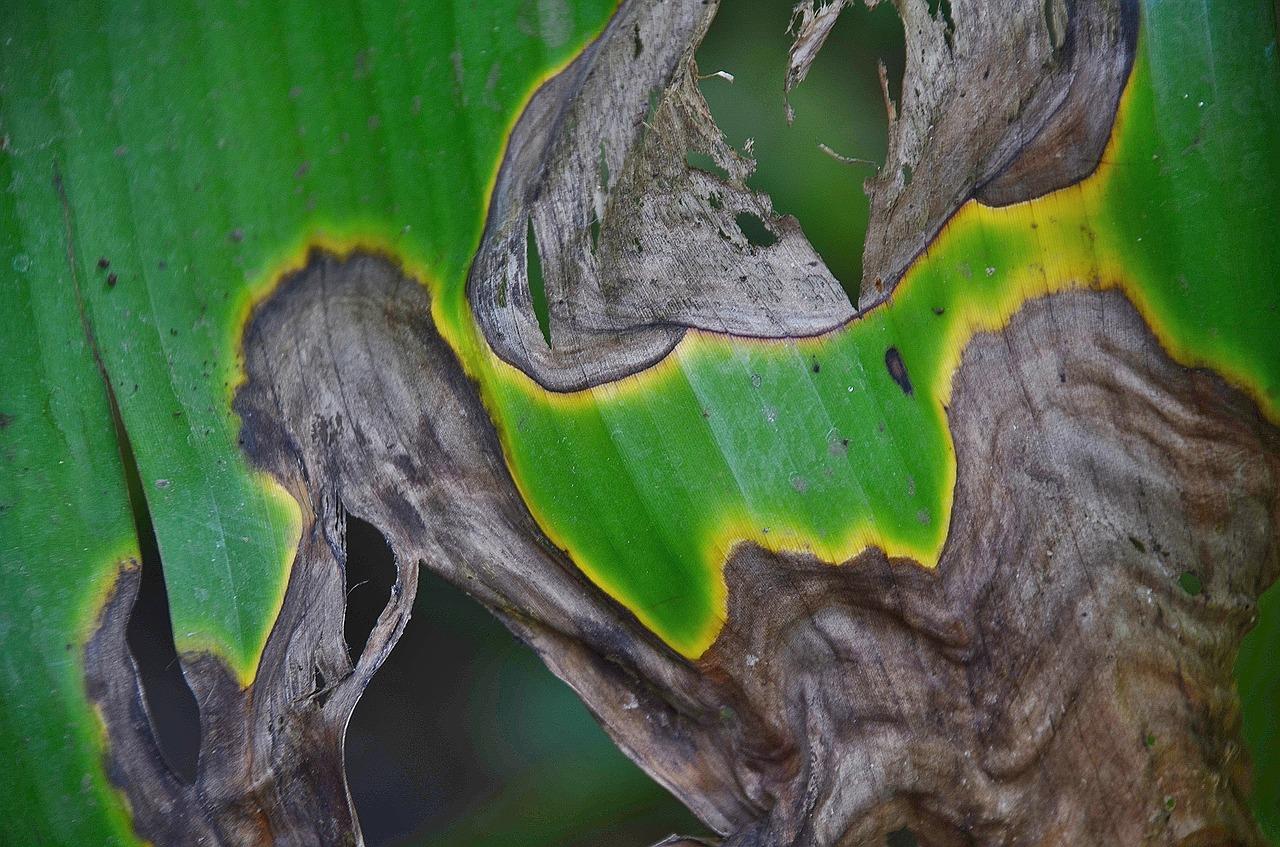 Pflanzenkrankheiten